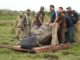 Forest officials engaged translocate a rhino to Bura Chapori Wildlife Sanctuary in Kaziranga National Park on 29-03-16. Two rhinos being translocate to Bura Chapori Wildlife Sanctuary from Kaziranga. Pix by UB Photos