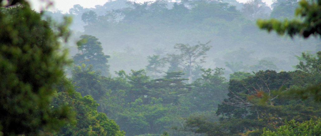 forests_and_woodlands_ashanti_region_south_ghana
