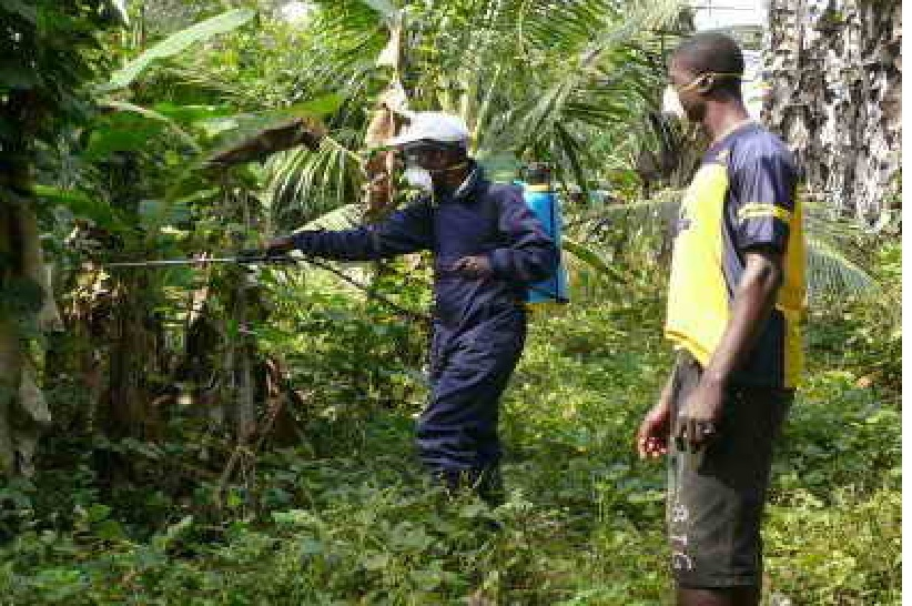 FLASHBACK: Ministry of Agriculture teams in Liberia spray insecticide in areas infested by a destructive caterpillar
