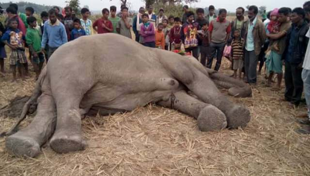 Train mows down five elephants in Assam